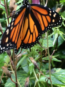 Even the scales that form the pattern on a butterflies wings function as an aggregate, evolved through time to deliver a broad range of benefits from camouflage to sexual expression to protection from the elements. An aggregate creature.