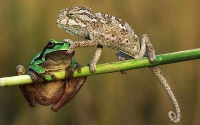 Gecko Toad Tweek.jpg