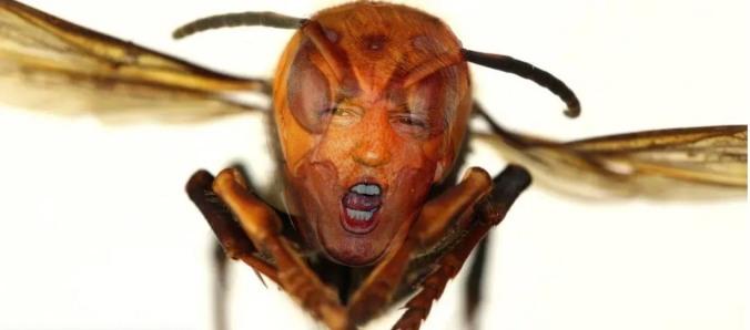 Murder Hornet Trump